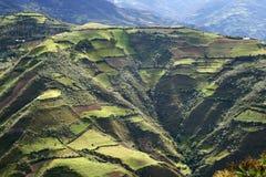 De Andes Stock Foto