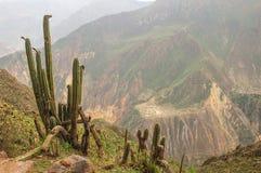 De Andes in Peru Royalty-vrije Stock Foto