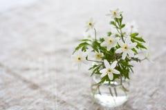 De anemonen van de lente Stock Afbeelding