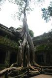De Angkormanier, Siem oogst, Kambodja Stock Afbeelding