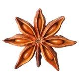 De anijsplant van de ster Royalty-vrije Stock Foto's