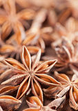 De anijsplant van de ster Stock Afbeeldingen