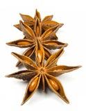 De Anijsplant van de ster Stock Fotografie