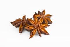 De anijsplant van de ster Stock Afbeelding