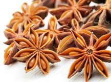 De anijsplant van sterren Stock Foto's