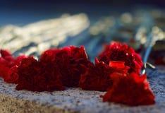 De anjers van scharlaken kleur liggen op een granietgrafsteen stock fotografie