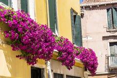 De antieke gele die bouw met roze bloeiende petuniabloemen wordt verfraaid in Venezia stock afbeelding