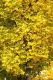 De antumnbladeren in een boom in park Stock Afbeeldingen