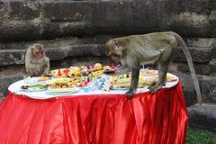 De apen graven in het voedsel bij jaarlijks Festival i van het Buffet van de Aap Stock Fotografie