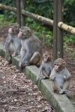 De Apen van de baby die op kant van de weg worden gerust royalty-vrije stock afbeelding