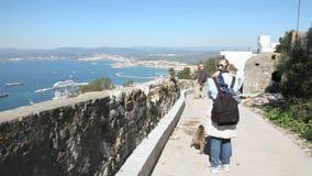 De apen van Gibraltar stock videobeelden