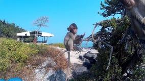 De apen zijn een boom stock footage