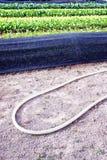 De apparatuur die voor het kweken van groenten wordt gebruikt Royalty-vrije Stock Afbeelding