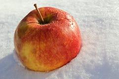 De appel legt op sneeuw bij daglicht Stock Afbeelding