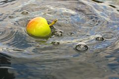De appel viel in het water stock afbeeldingen