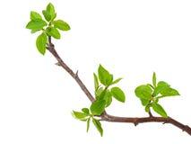 De appelboom van de tak Royalty-vrije Stock Fotografie