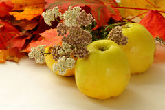 De appelen, de Herfst gaat weg en bloeit Stock Foto's