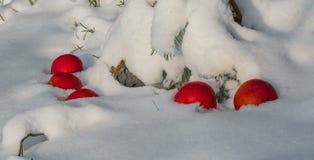 De appelen die op de sneeuw liggen stock afbeelding