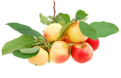 De appelen van het feest Stock Afbeeldingen