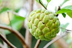 De appelfruit van de vla Royalty-vrije Stock Foto's