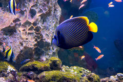 De aquariuminwoners van de onderwaterwereld Stock Afbeelding
