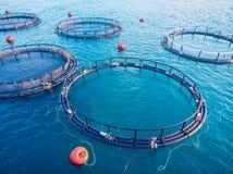 De aquicultuur blauw water van de zalmviskwekerij Lucht hoogste mening royalty-vrije stock foto's