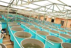 De aquicultuurlandbouwbedrijf van de landbouw Royalty-vrije Stock Afbeeldingen