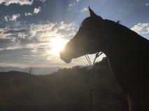 De Arabische Zonsondergang van het Paardsilhouet royalty-vrije stock fotografie