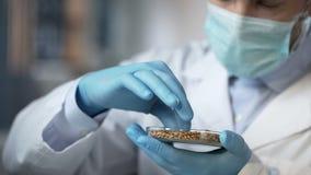 De arbeider die van het voedsellaboratorium zorgvuldig kwaliteit van graangewassenoogst controleren de uitvoer stock foto's