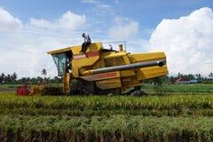 De arbeider gebruikt machine om rijst op padiegebied te oogsten Stock Afbeeldingen