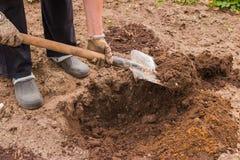 De arbeider graaft de zwarte grond met schop in de moestuin, maakt de vrouw vuil in de landbouwgrond los, landbouw en hard royalty-vrije stock afbeeldingen
