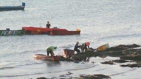 De arbeider neemt de groene mossel op zee op van zeeschelplandbouwbedrijf stock footage