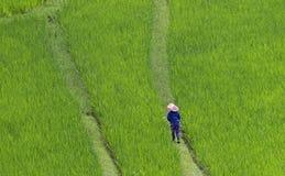 De arbeider van het padieveld stock foto