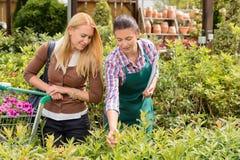 De arbeider van het tuincentrum geeft advies aan klant Stock Foto