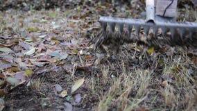De arbeider verwijdert oude de herfstbladeren stock footage