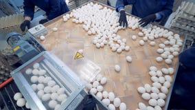 De arbeiders bij gevogelte zetten verse eieren in kratten Industriële productie van eetbaar ei stock video