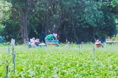 De arbeiders helpen om groenten op te nemen Royalty-vrije Stock Foto's