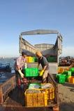 De arbeiders laden foeragevissen op de vrachtwagen aan de voermolen in Lagi-zeehaven Stock Foto's