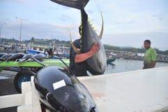 De arbeiders laden in het algemeen tonijn op vrachtwagen aan de stad van Santos van de zeevruchtenfabriek stock foto's
