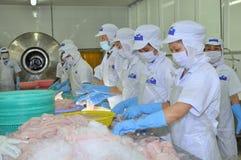De arbeiders testen de kleur van pangasiusvissen in een installatie van de zeevruchtenverwerking in Tien Giang, een provincie in  Stock Fotografie