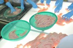 De arbeiders testen de kleur van pangasiusvissen in een installatie van de zeevruchtenverwerking in Tien Giang, een provincie in  Royalty-vrije Stock Foto