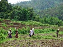 De arbeiders van de rijst Royalty-vrije Stock Fotografie