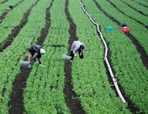 De arbeiders van het landbouwbedrijf op een groen gebied Stock Foto's