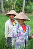 De Arbeiders van het padieveld stock foto's