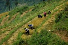 De arbeiders van het padieveld rond Sapa, Vietnam Royalty-vrije Stock Foto's