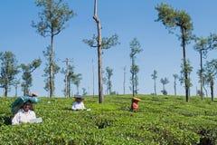 De arbeiders van het theelandgoed in Tamil Nadu, India royalty-vrije stock foto's