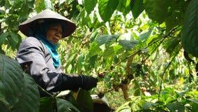 De Arbeiders van de koffieplukker stock foto