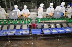 De arbeiders werken met een garnaal rangschikkend machine in een verwerkingsinstallatie in Hau Giang, een provincie in de Mekong  Stock Afbeeldingen