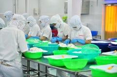 De arbeiders zijn scherpe pijlinktvissen voor het uitvoeren in een zeevruchtenfabriek in Vietnam Stock Afbeeldingen