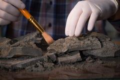 De archeoloog die laat - nacht in bureau werken stock foto's